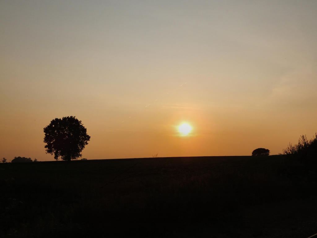 Sunset Between The Trees By Wolfywardark On Deviantart