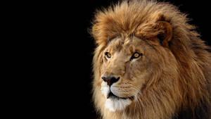 Mac OS X Lion Wallpaper