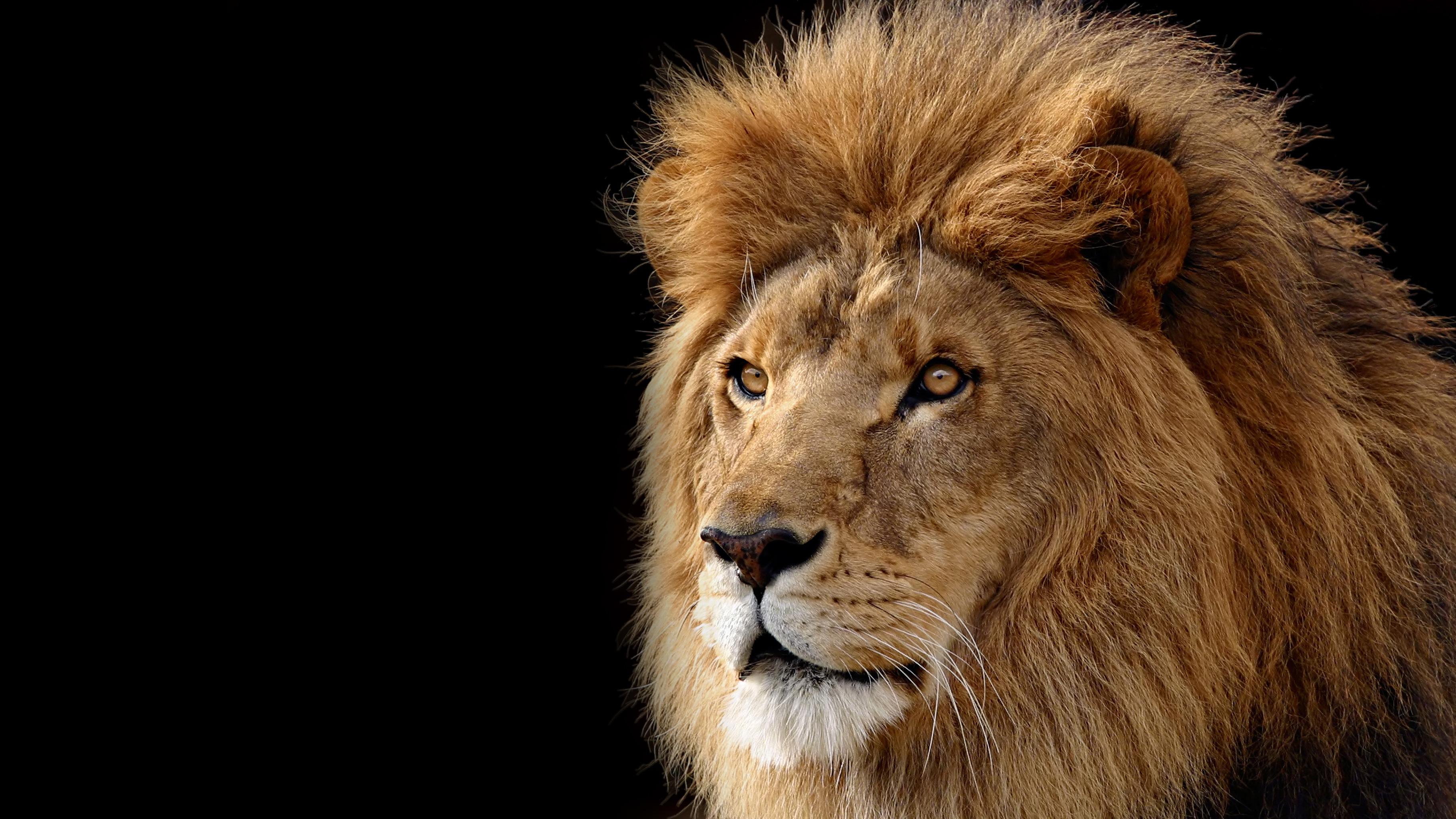 Mac OS X 10.7 Lion 默认壁纸下载