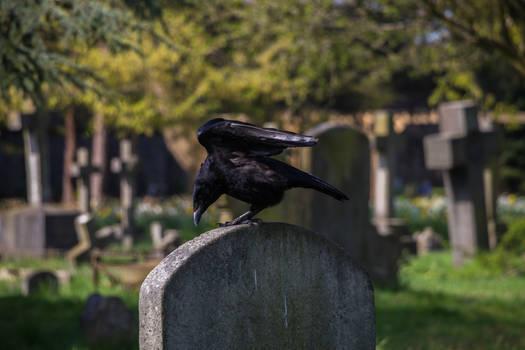 Brompton's Raven