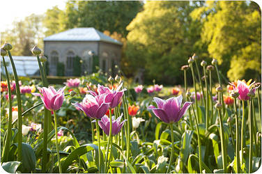 The botanical garden, Lund by skuggsida