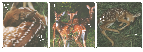 . f2u deer decor thing . by pIastic-knife