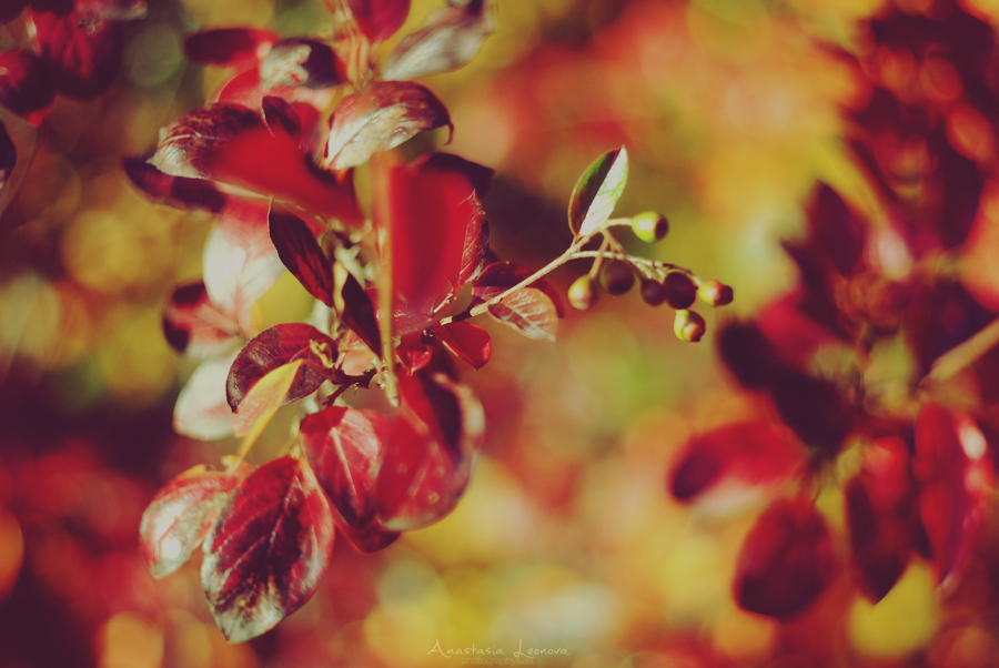 autumn beauty 4 by poisonesss