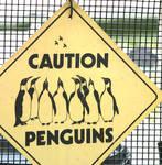 Caution, penguins