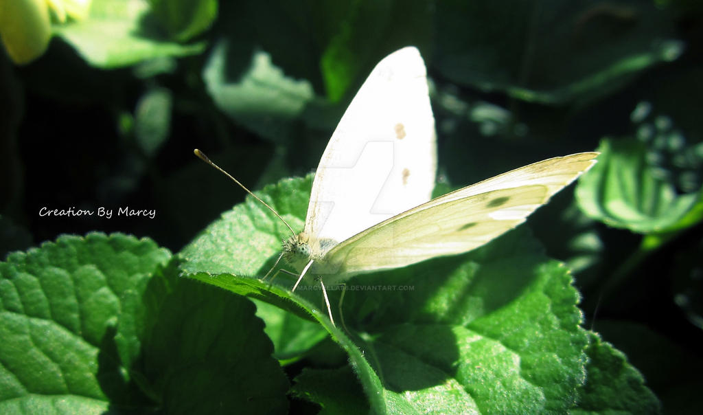 Butterfly by Marcyella86
