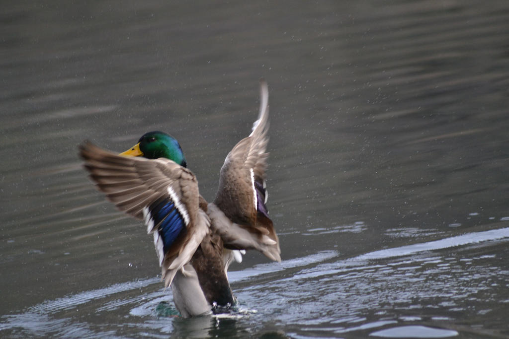 Now Ducks by Mariestel