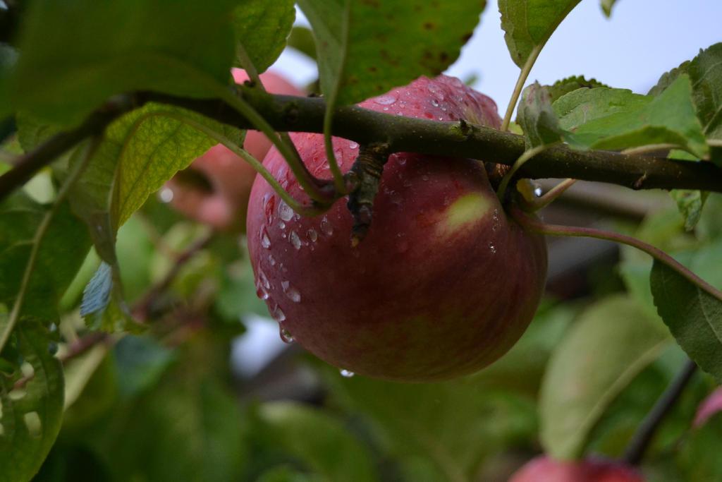 Apple by Mariestel