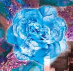BlueRosePrintDL