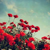 poppies III by ZanaSoul