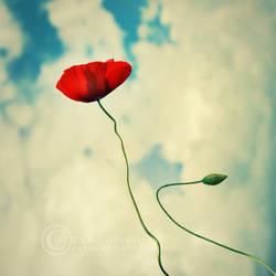 balloon poppy by ZanaSoul