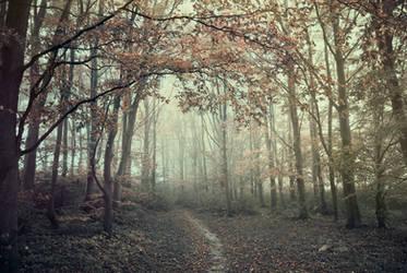 Autumns warmth