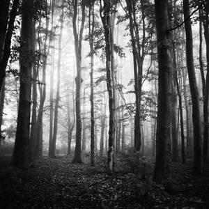 reach for the light by ZanaSoul