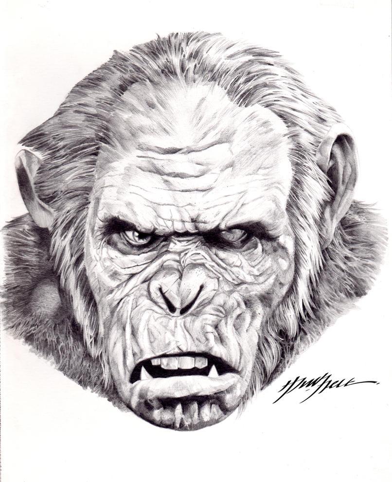 Koba pencil drawing copy by hazzla