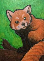 Red Panda Art Card