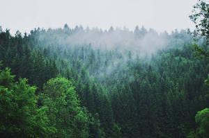 fog by Day--Dream