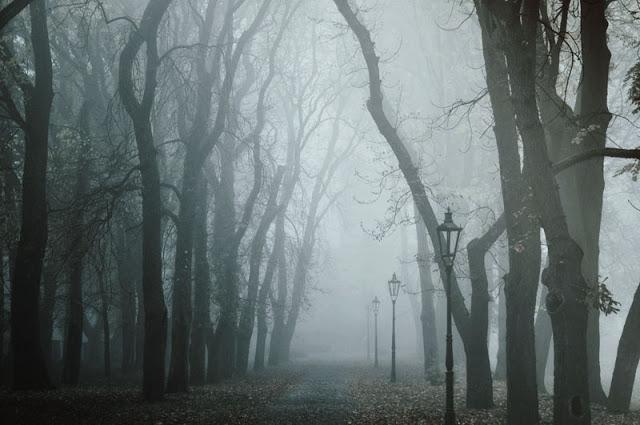 nebel by Day--Dream