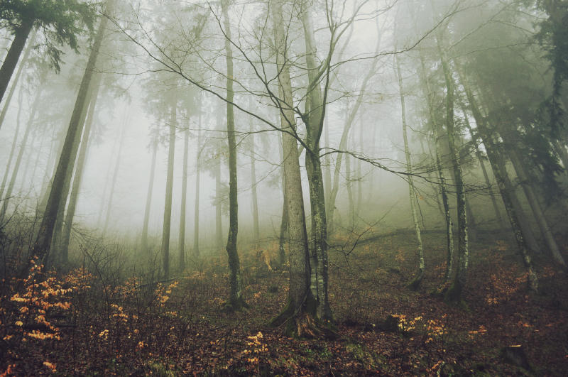 morning fog by Day--Dream