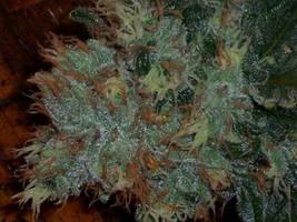 Marijuana Orange Haired by marijuana