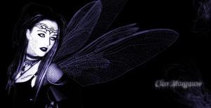 Wasp Queen.... Vespa Rainha