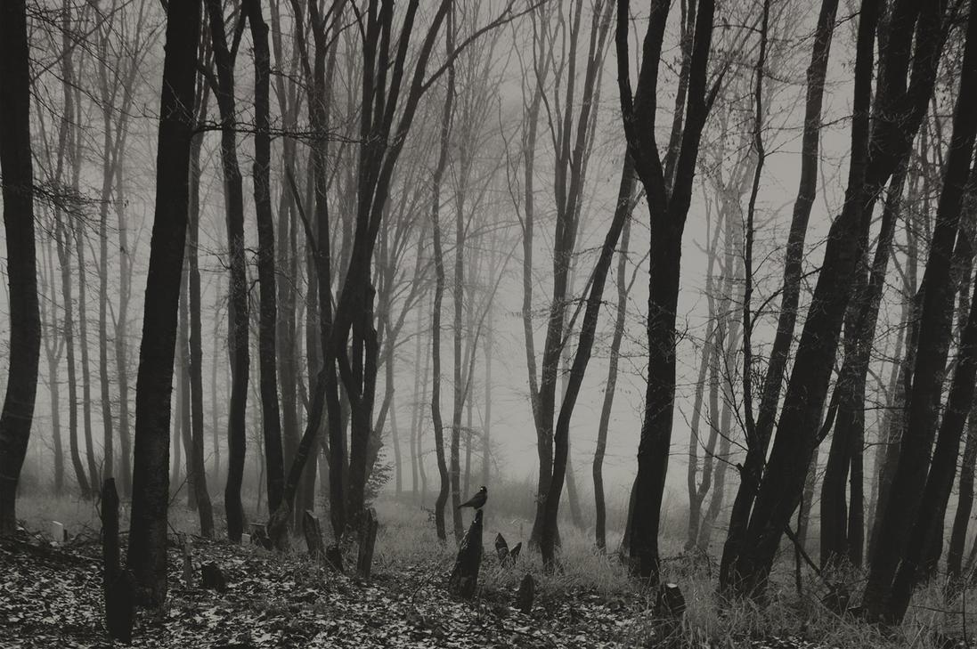Foggy Graveyard By No Data