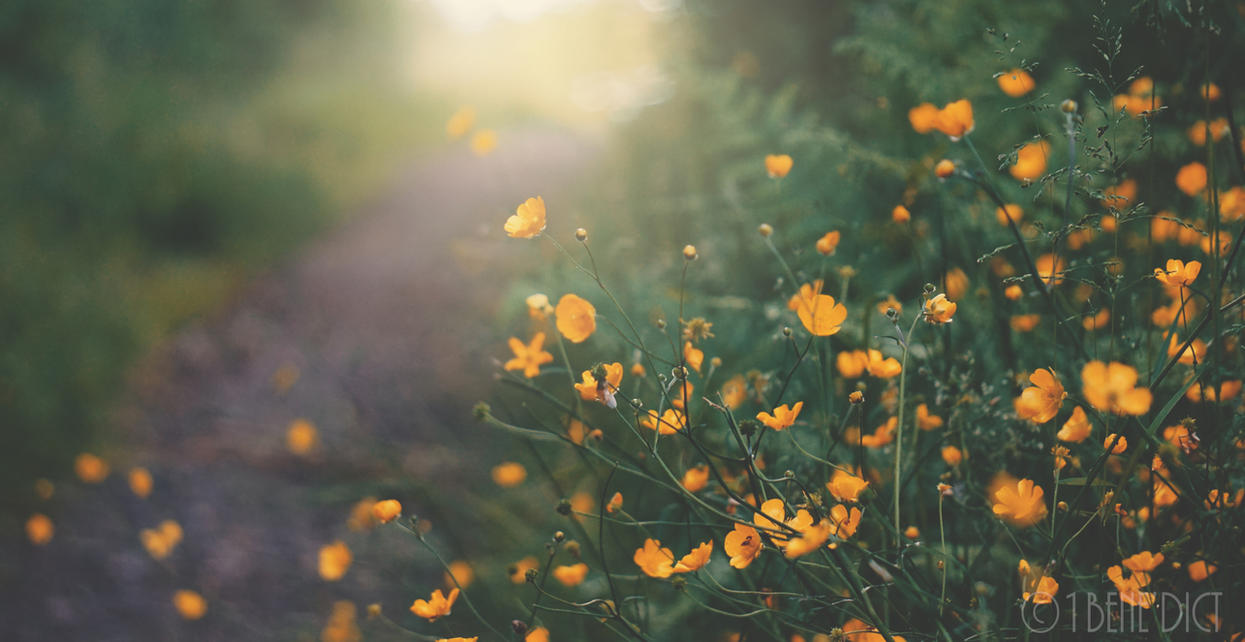 Yellow flowers by 1BeneDict