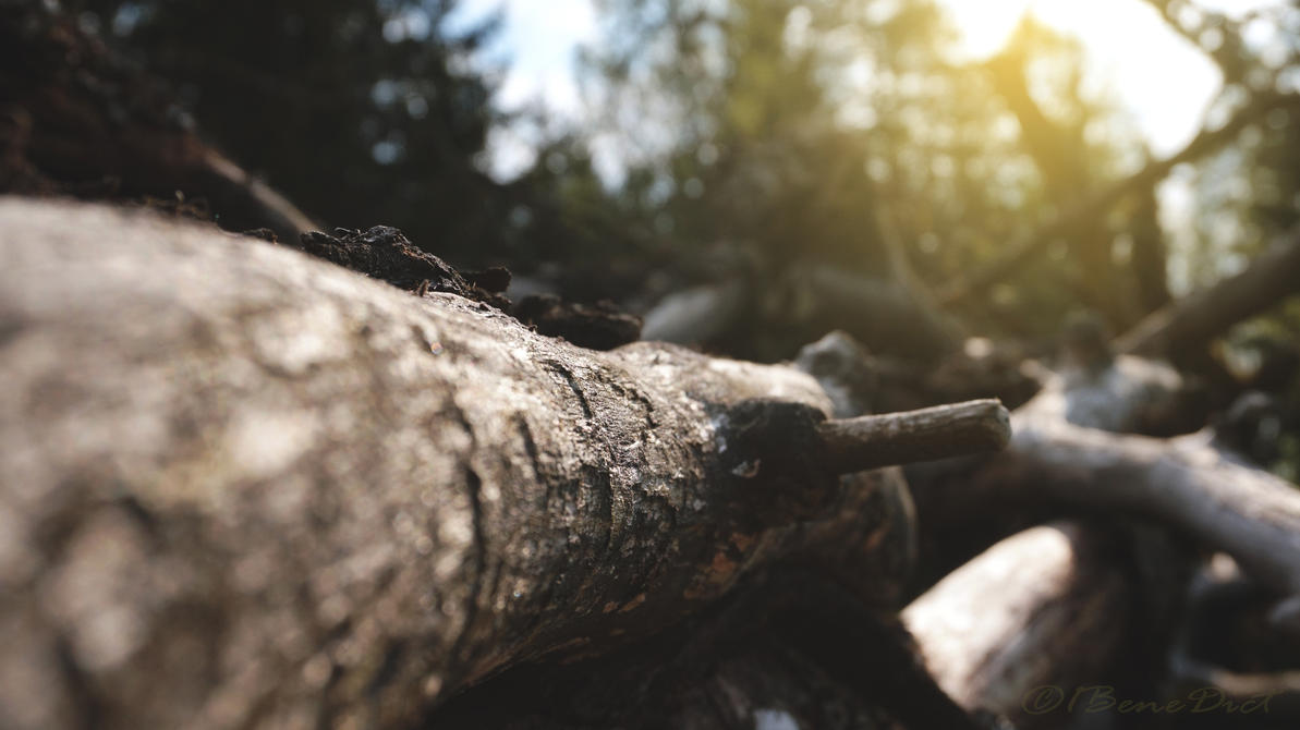 Resting Oak by 1BeneDict