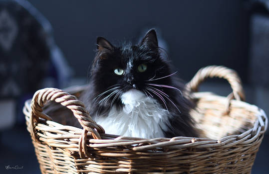 It places the cat in the basket...