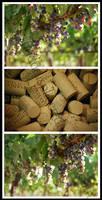 Parducci Wine Cellars by ShadowSplicer
