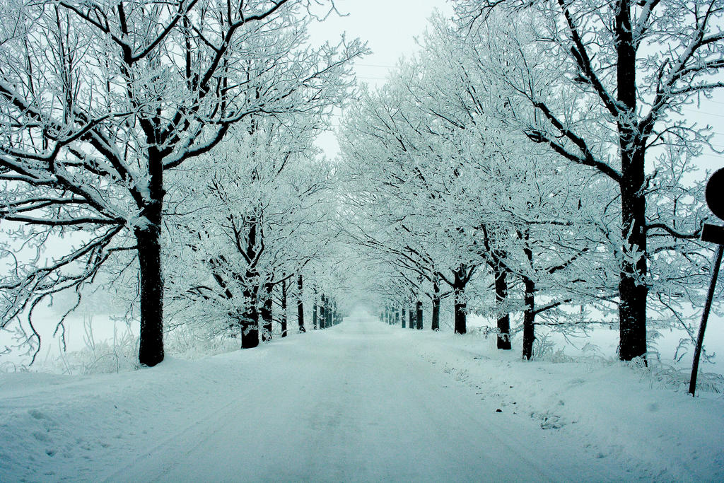 Go Back > Gallery For > Winter Trees