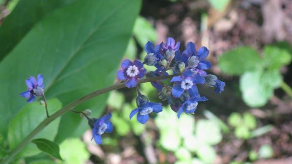 I like purple by orcafinatic