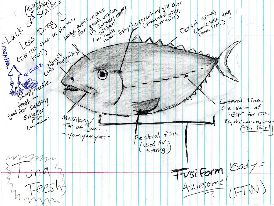 Diagrams Of Fish Art Circuit Diagram Symbols
