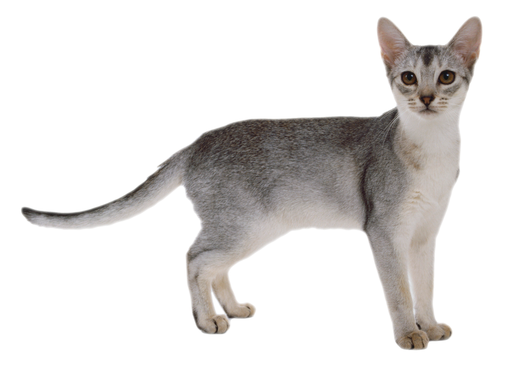 FREE CAT PNG by AbsurdWordPreferred