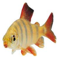 Fish Transparent PNG by AbsurdWordPreferred