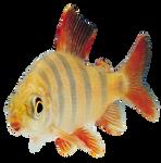 Fish Transparent PNG
