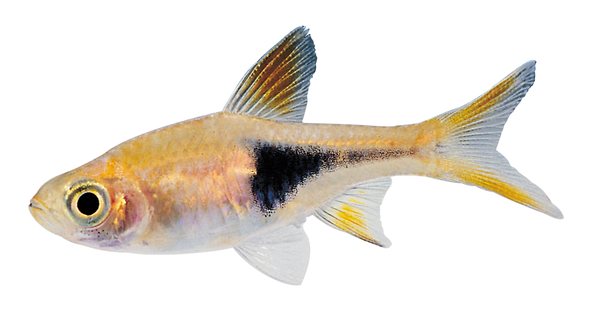 Little Fish png by AbsurdWordPreferred