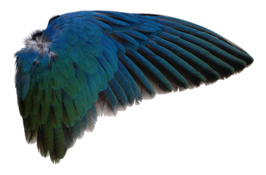Wing PNG by AbsurdWordPreferred