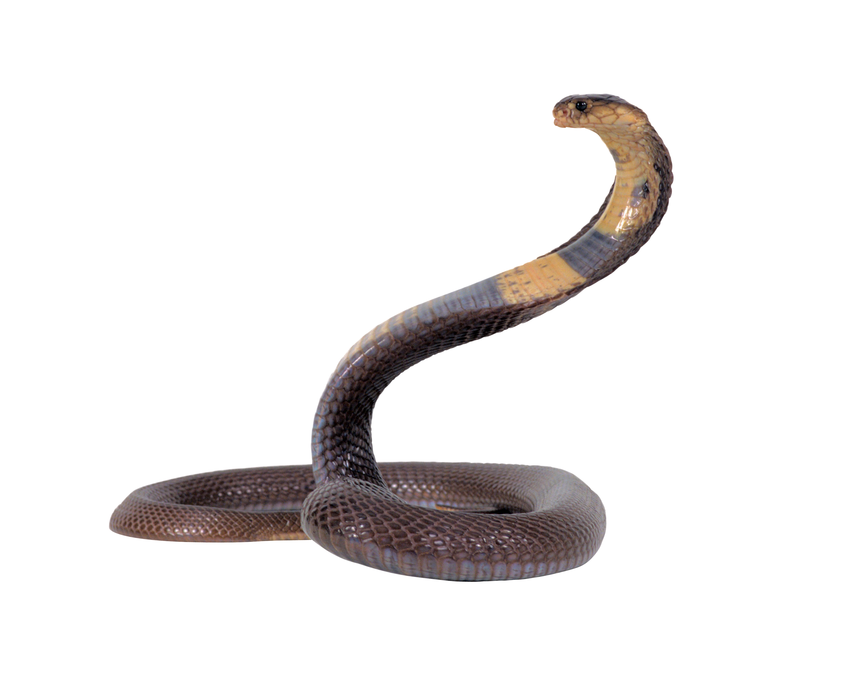 Snake transparent png by AbsurdWordPreferred
