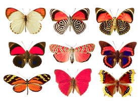 Butterflies png by AbsurdWordPreferred
