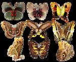 Butterflies2 png