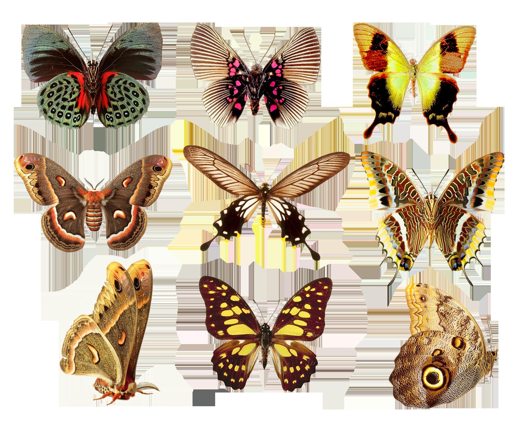 Butterflies2 png by AbsurdWordPreferred