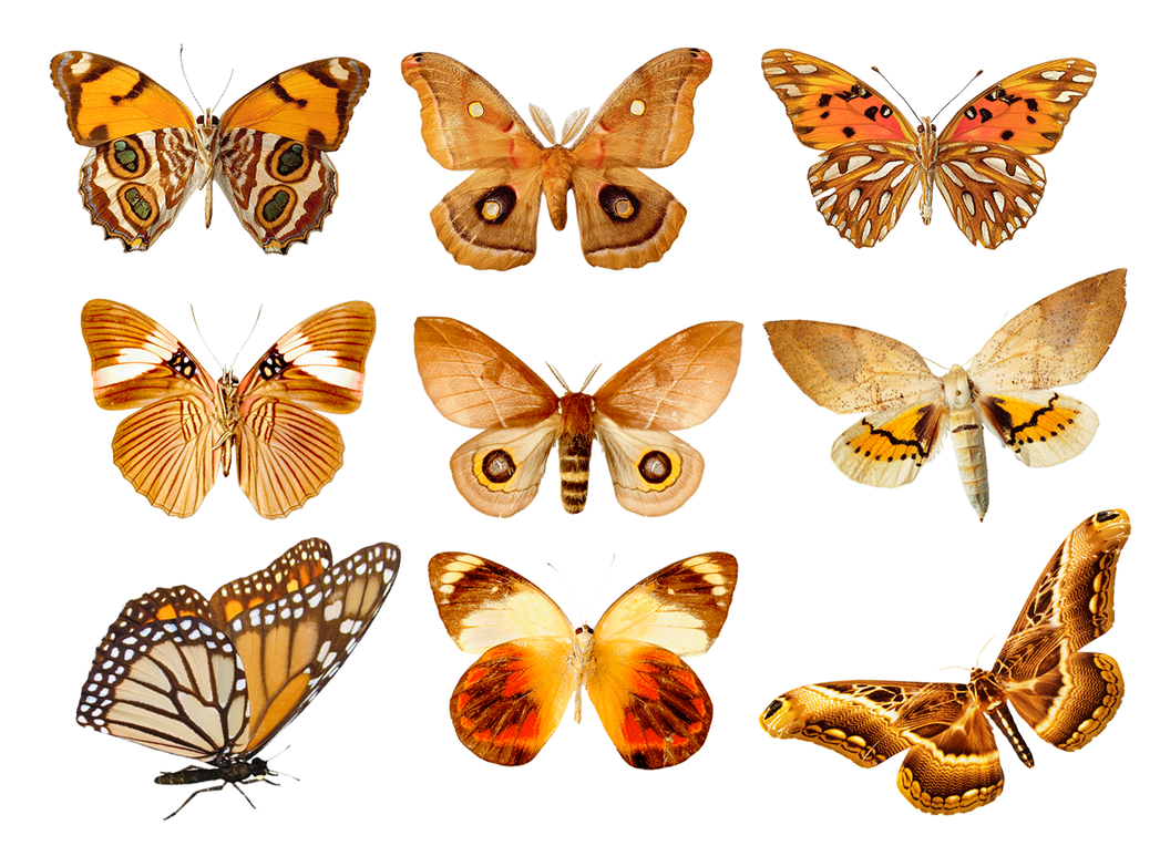 Butterflies3 png by AbsurdWordPreferred