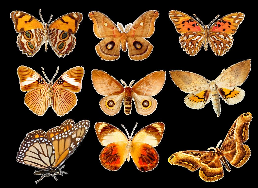 Butterflies3 png by AbsurdWordPreferred