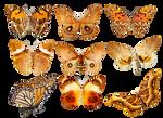 Butterflies3 png