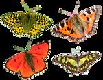 Butterflies4 png