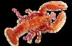 Lobster png