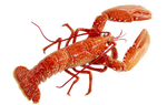 Lobster png