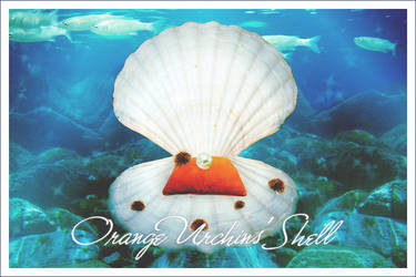 Orange Urchins' Shell