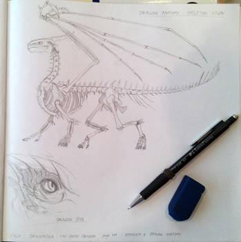 Dragon Anatomy Study