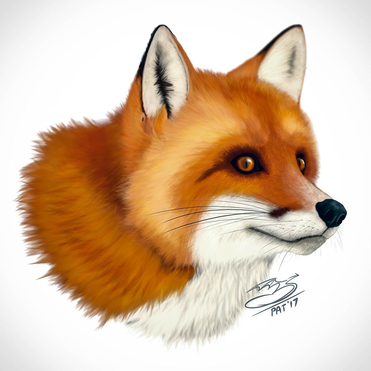 Fur Study - Adorable Fox is Adorable