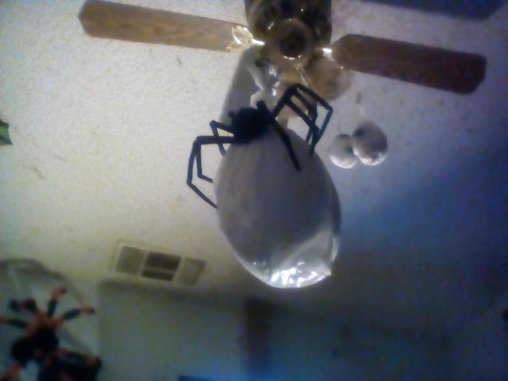 Homemade Giant Spider Egg Sac by BenorianHardback26
